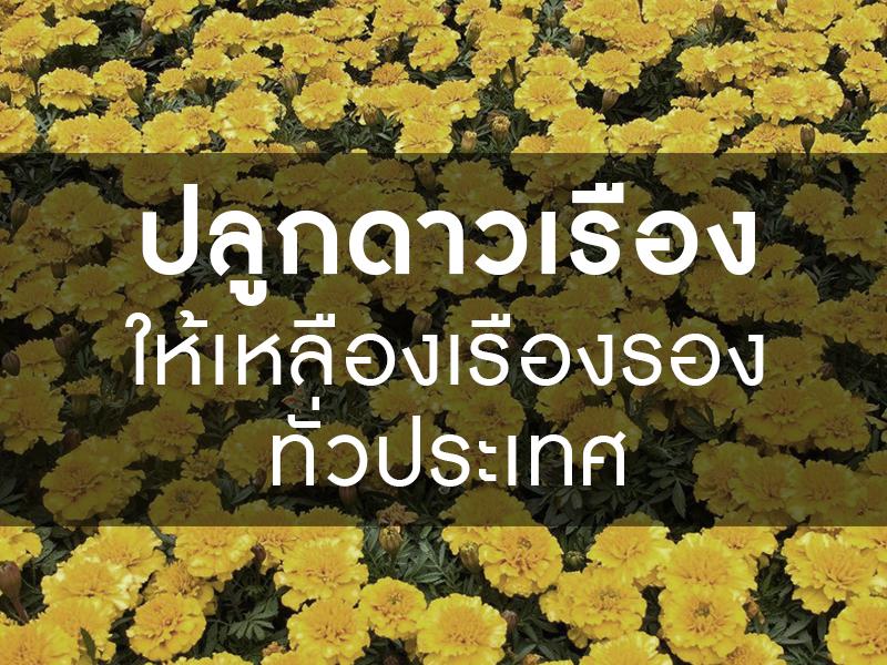 ร่วมปลูกดอกดาวเรืองให้เหลืองเรืองรอง เพื่อรำลึกถึงพระมหากรุณาธิคุณ ในหลวงรัชกาลที่๙